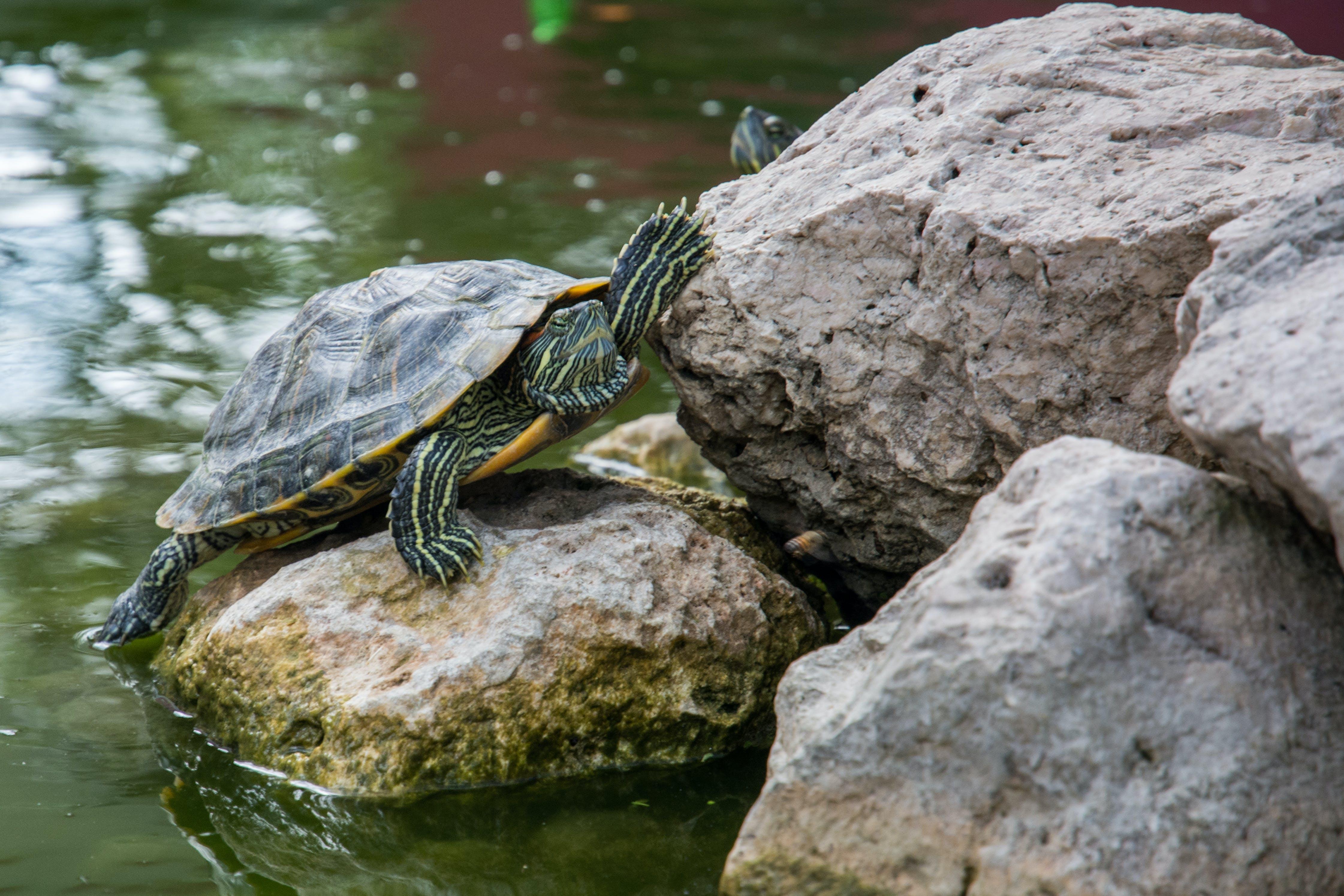 kameny, voda, želva