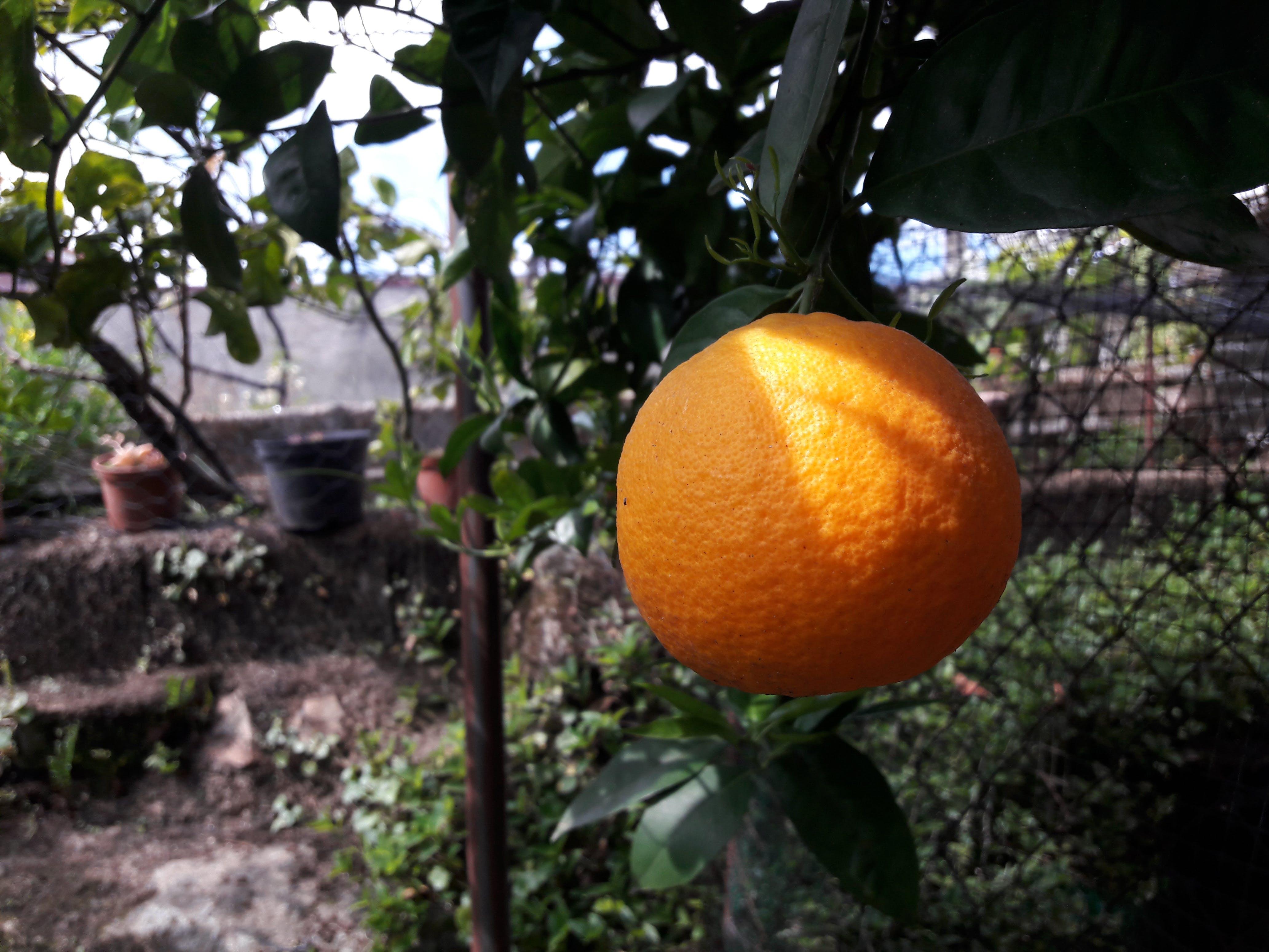 Free stock photo of citrus fruits, fresh, fresh food, fruit