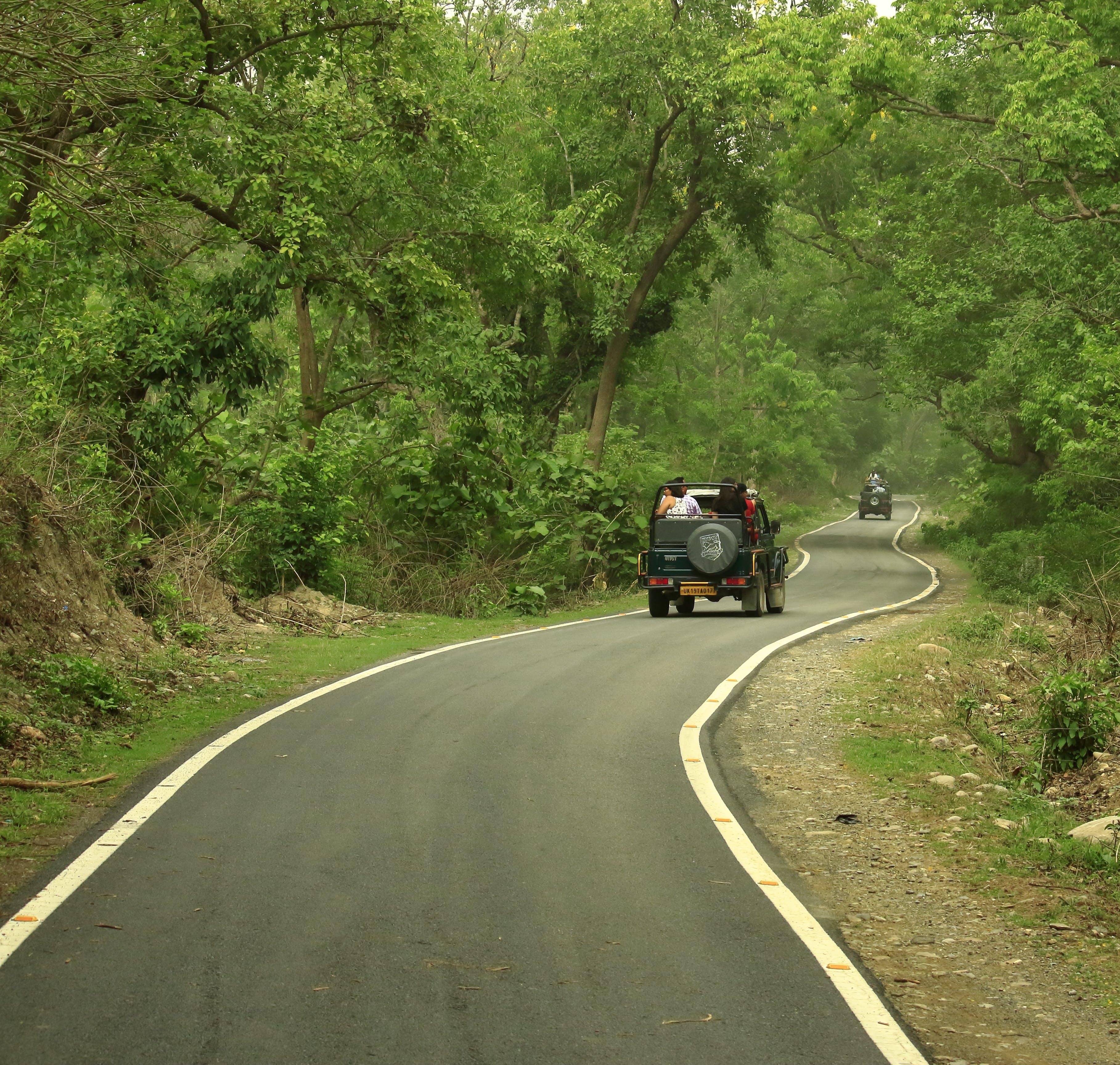 Foto d'estoc gratuïta de #jeep #jimcorbett #tiger #safari #wildlife #roads, #wildlifephotography #animal_captures #animals_in_