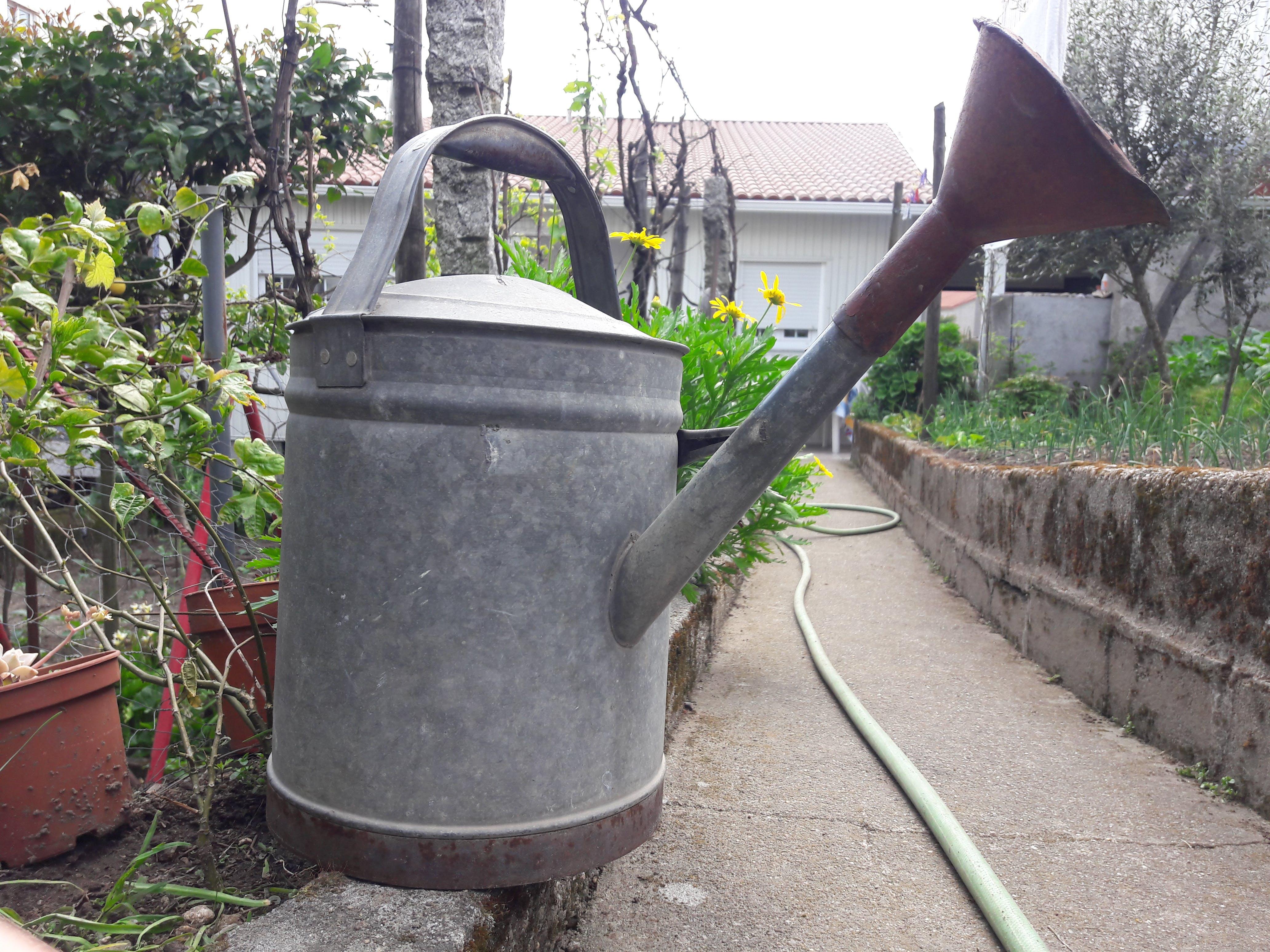 Free stock photo of backyard, fresh vegetable, garden, grandparents