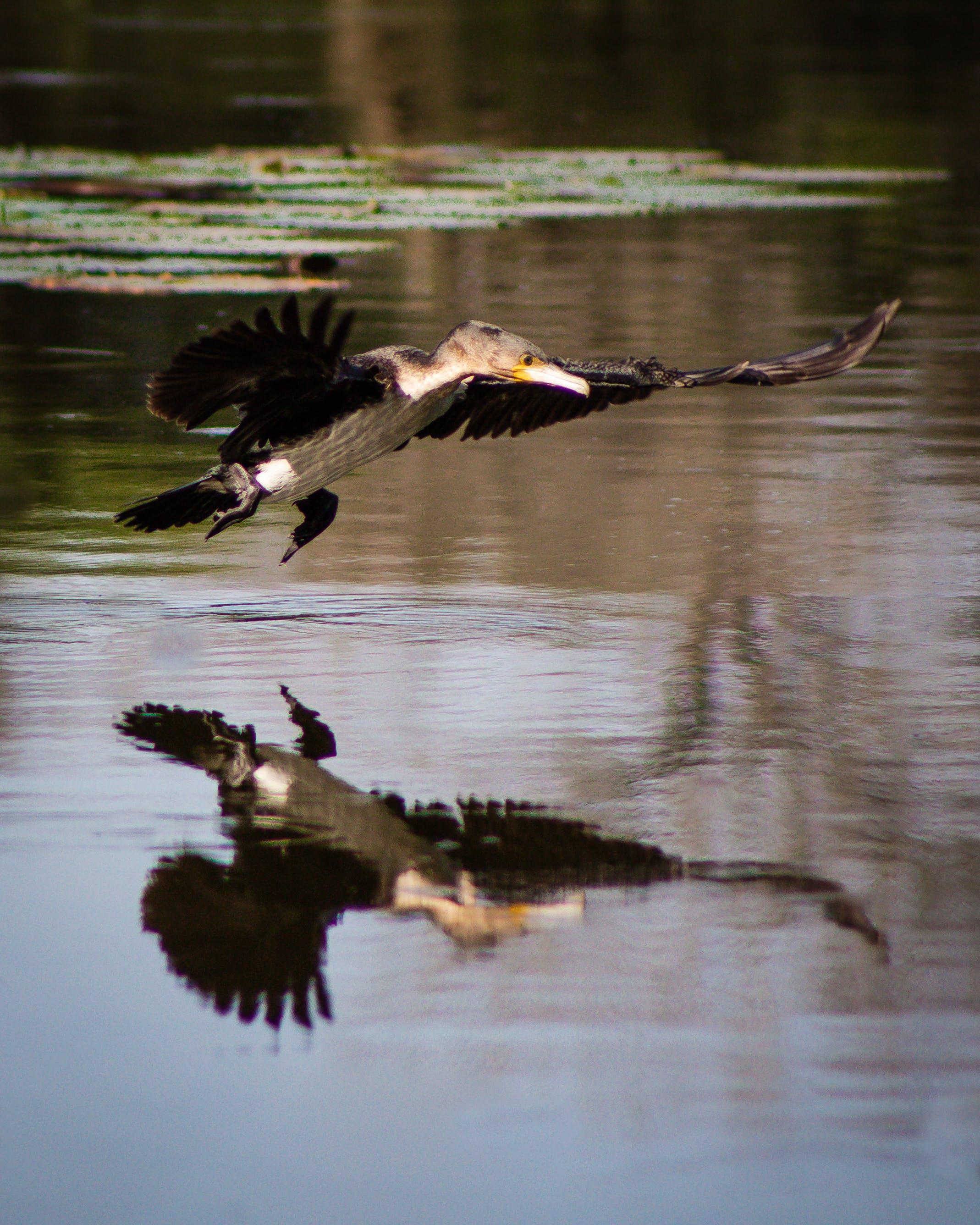 Kostenloses Stock Foto zu fliegen, flügel, reflektierung, tier