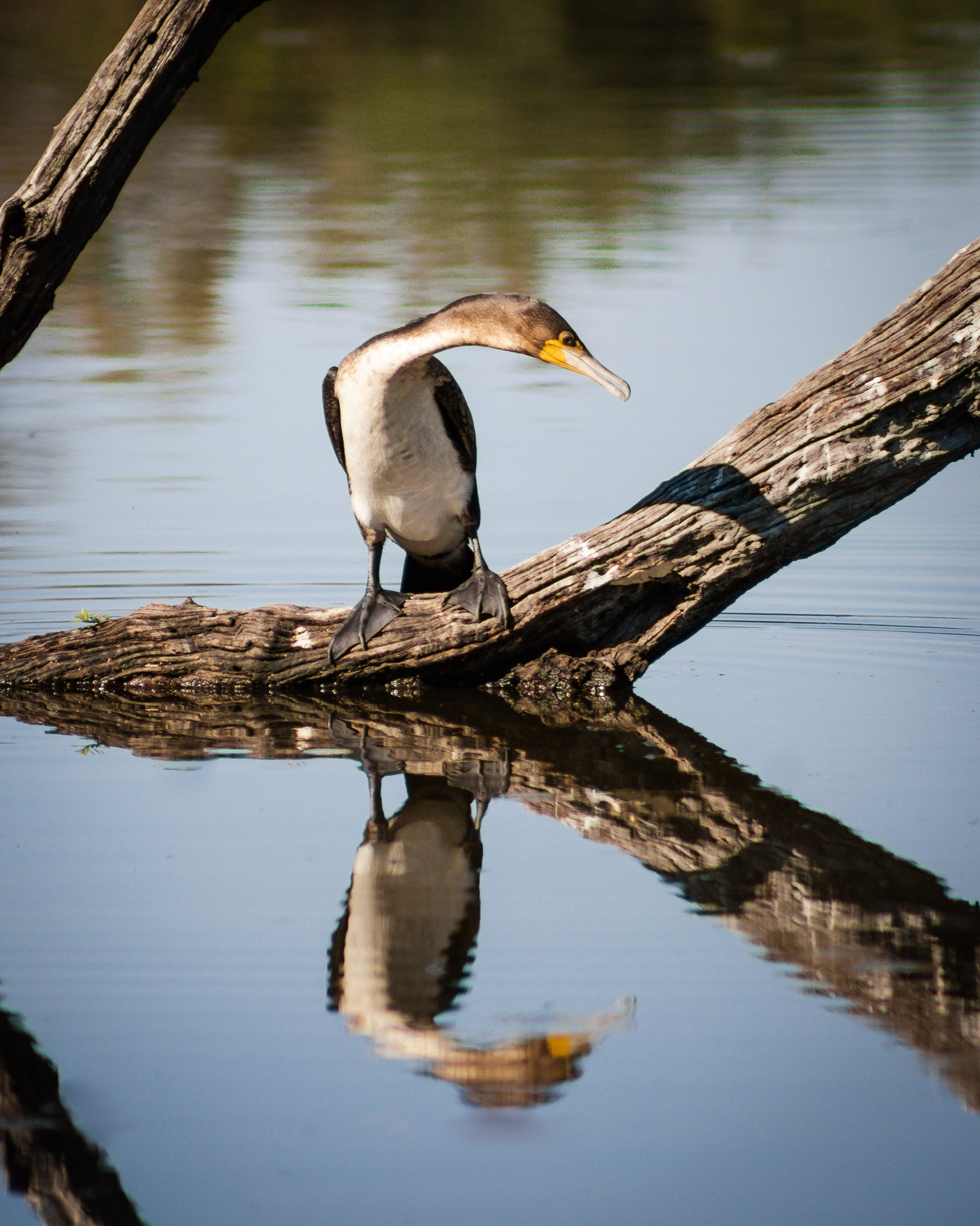Photo of Duck Perched On Drift Wood