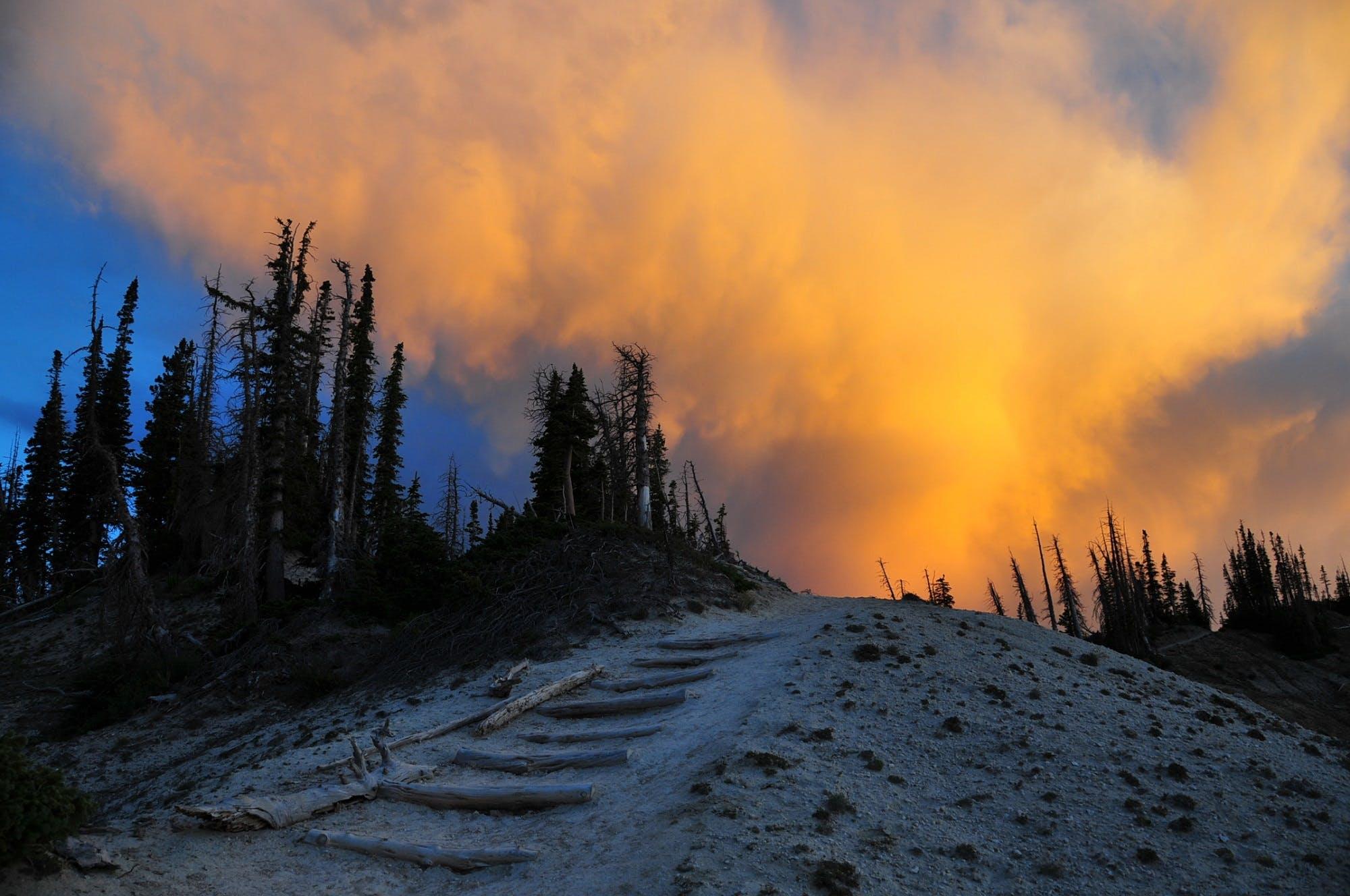 Free stock photo of wood, dawn, landscape, sunset