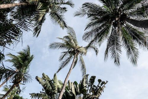 Foto stok gratis daun palem, di luar rumah, fotografi sudut rendah, langit