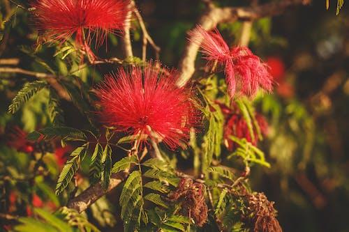 Darmowe zdjęcie z galerii z liście, park, park miejski, środowisko