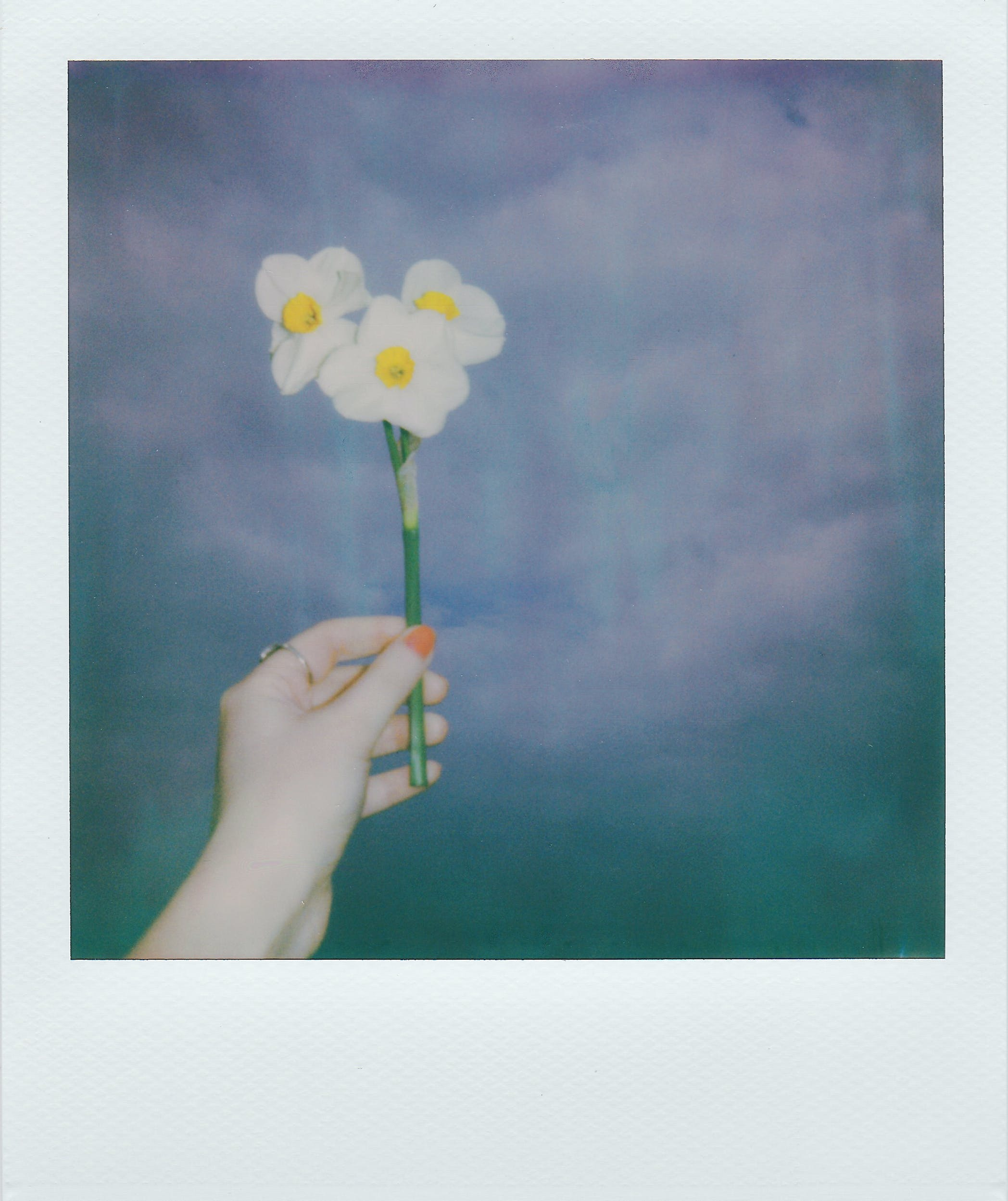 Person's Left Hand Holding Three White-petaled Flowers