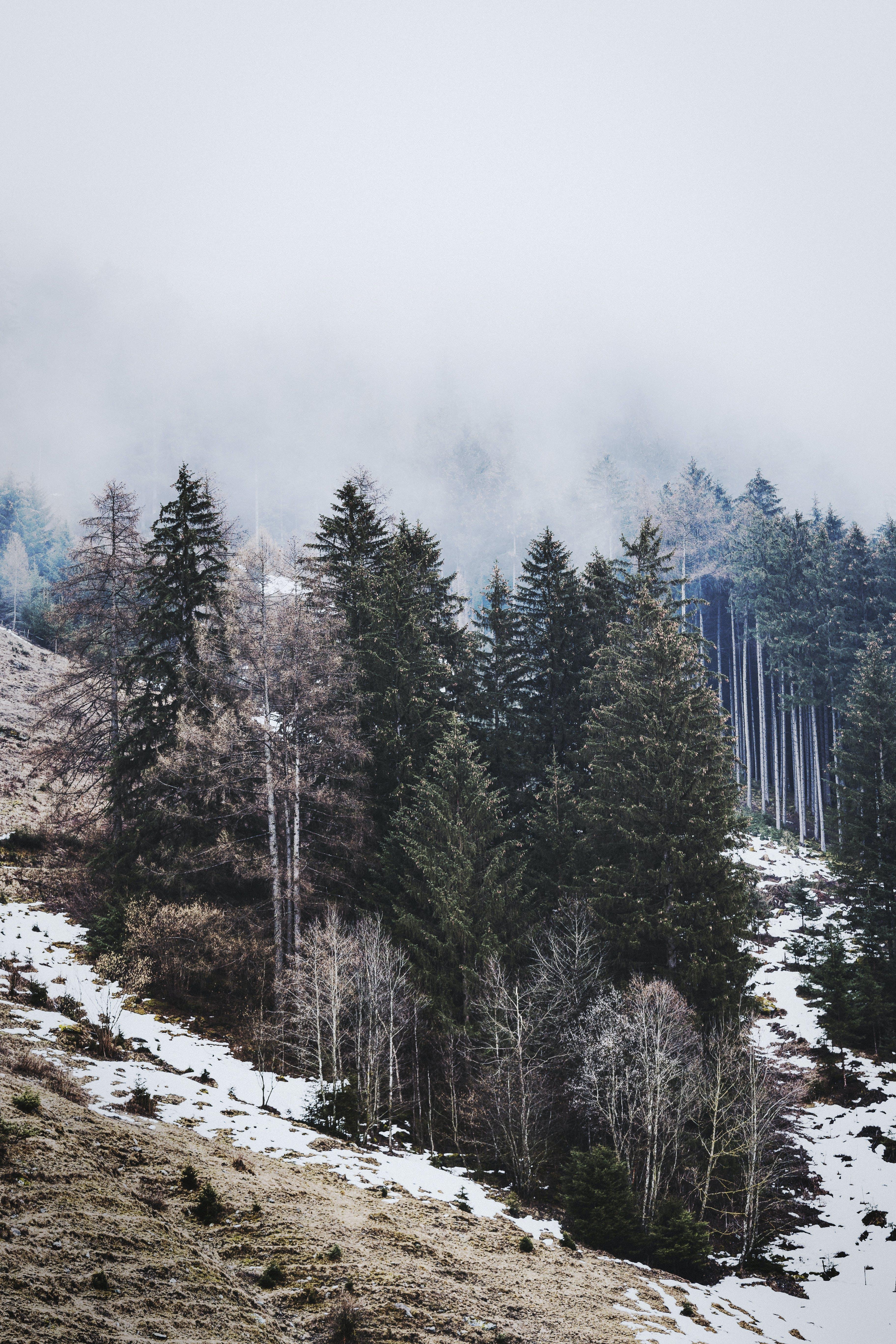 コールド, 冬, 冬の風景, 凍るの無料の写真素材