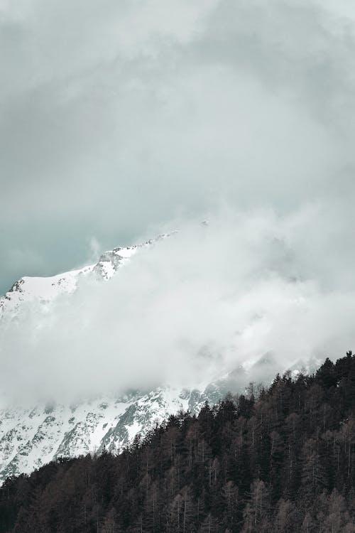 Photos gratuites de altitude, arbres, bois, brouillard