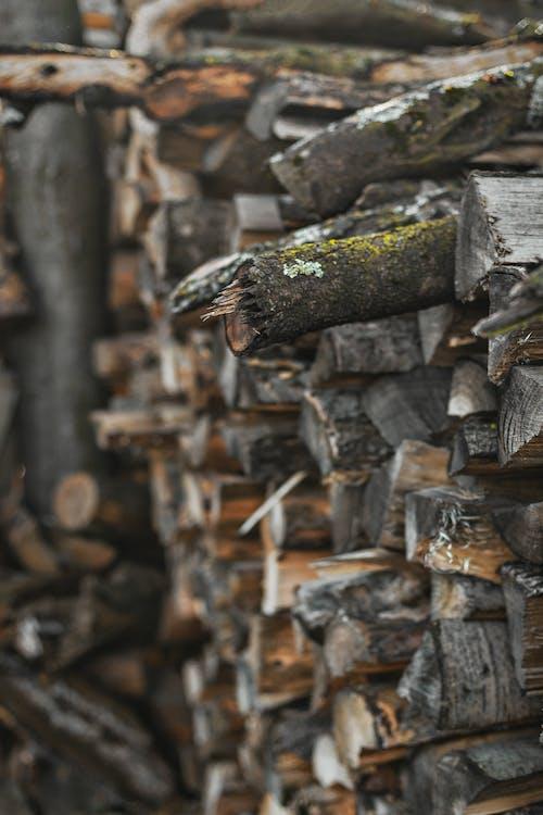 catasta di legna, concentrarsi, focalizzare
