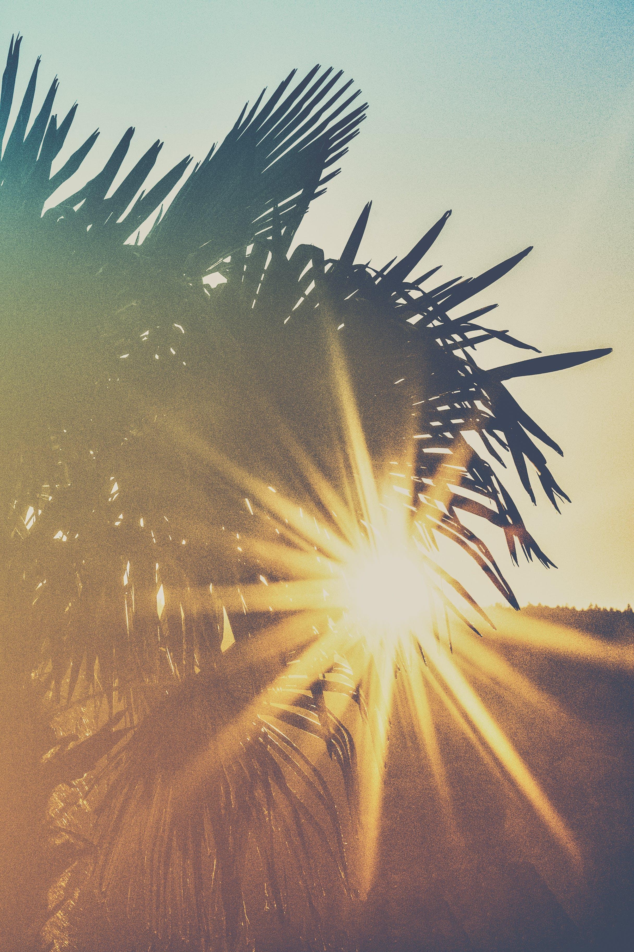 Foto stok gratis alam, bayangan hitam, daun palem, di luar rumah