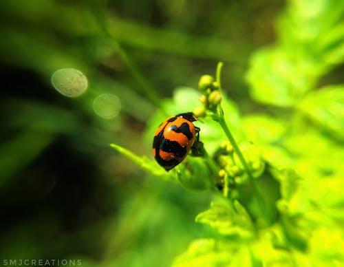 Ingyenes stockfotó makrófotózás, szépség a természetben, természet, természet háttér témában