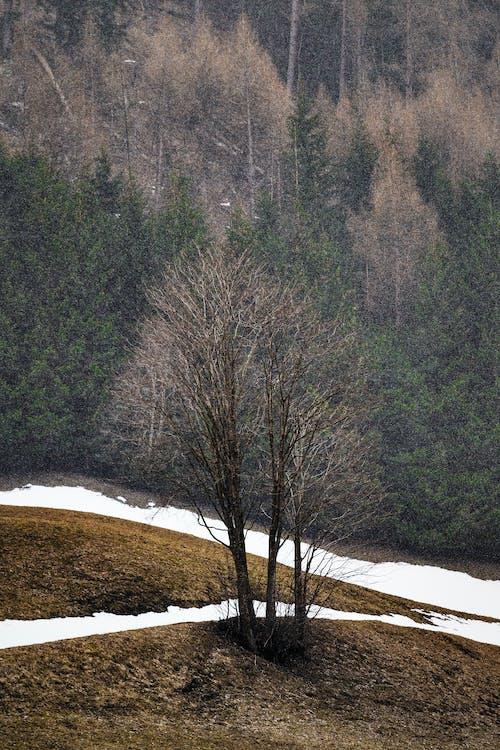 Ingyenes stockfotó befagyott, erdő, fagy, fagyos témában