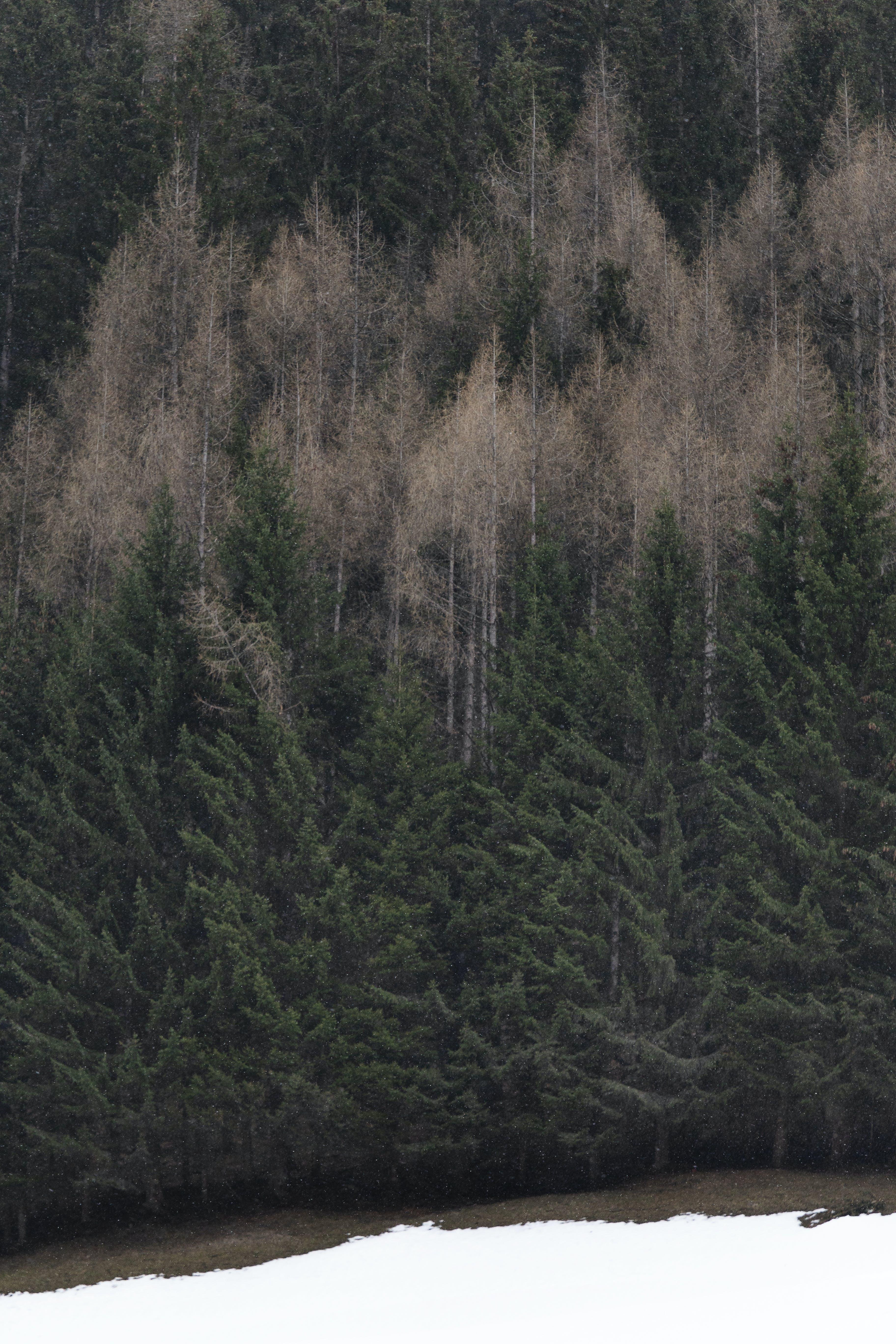 Základová fotografie zdarma na téma barvy, borovice, denní, denní světlo