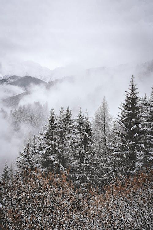 ağaçlar, çevre, dağlar