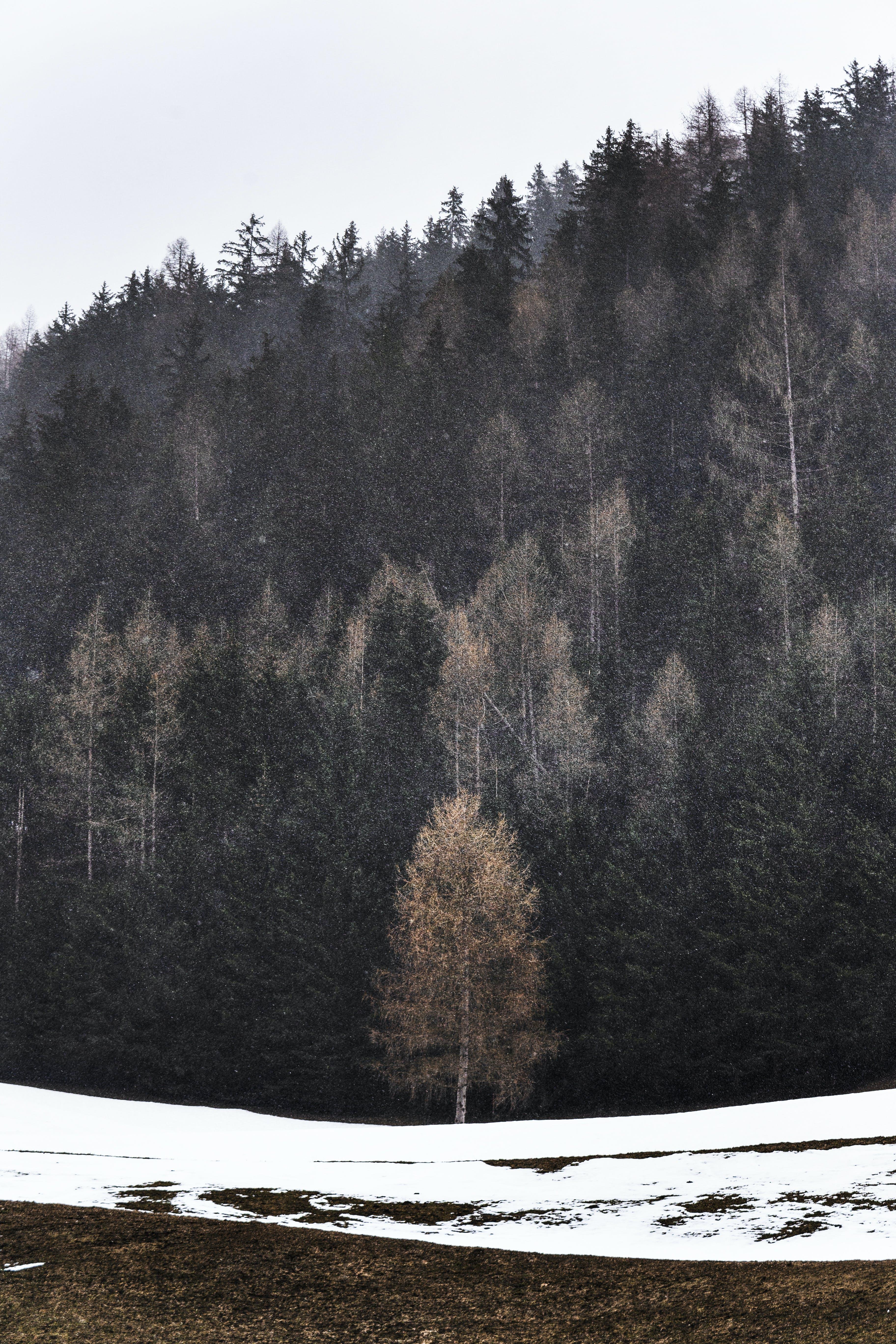 bjerg, dagslys, dagtimer