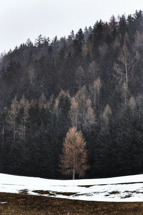 Gratis arkivbilde med årstid, dagslys, dagtid, fjell