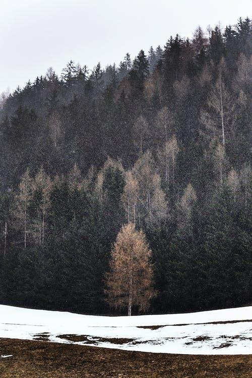 ağaçlar, buz, buz gibi hava