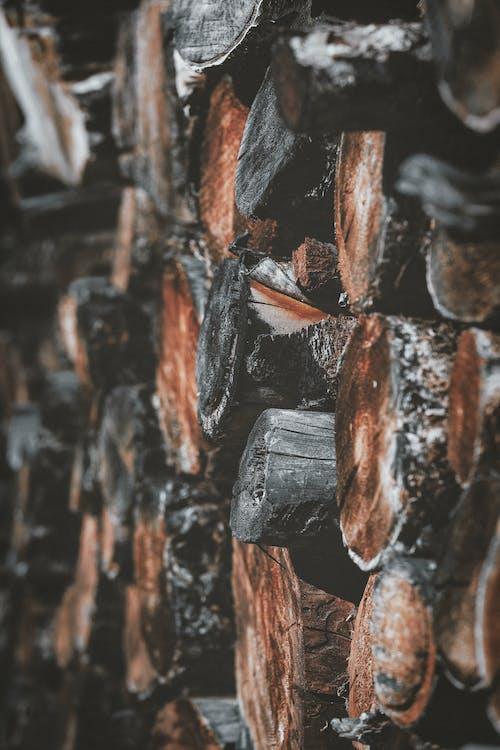 Ingyenes stockfotó apróra vágott fa, fa, fahalom, fahasáb témában