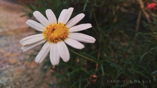 Free stock photo of beautiful flower, beauty in nature, dark, flower