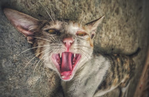 Fotos de stock gratuitas de #mobilechallenge, amante de los animales, bote, cara de gato