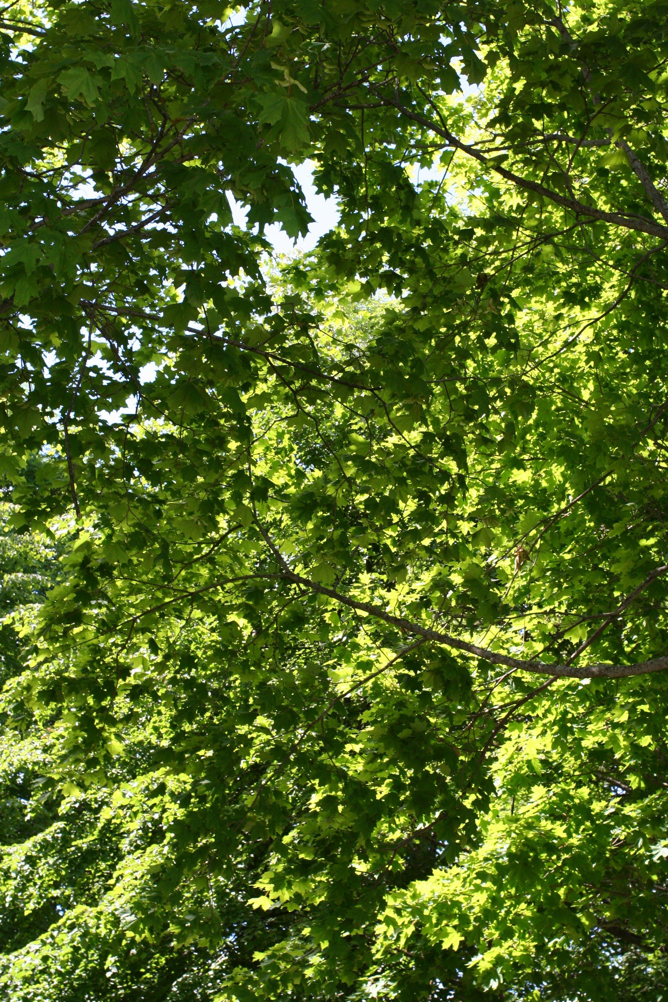 Fotos de stock gratuitas de #naturaleza, verano, verde