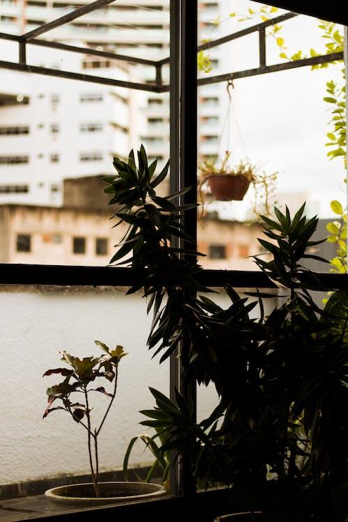 คลังภาพถ่ายฟรี ของ กลางแจ้ง, ซิลูเอตต์, สวน, อาคาร