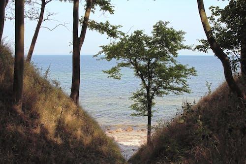 波羅的海, 海塗 的 免費圖庫相片