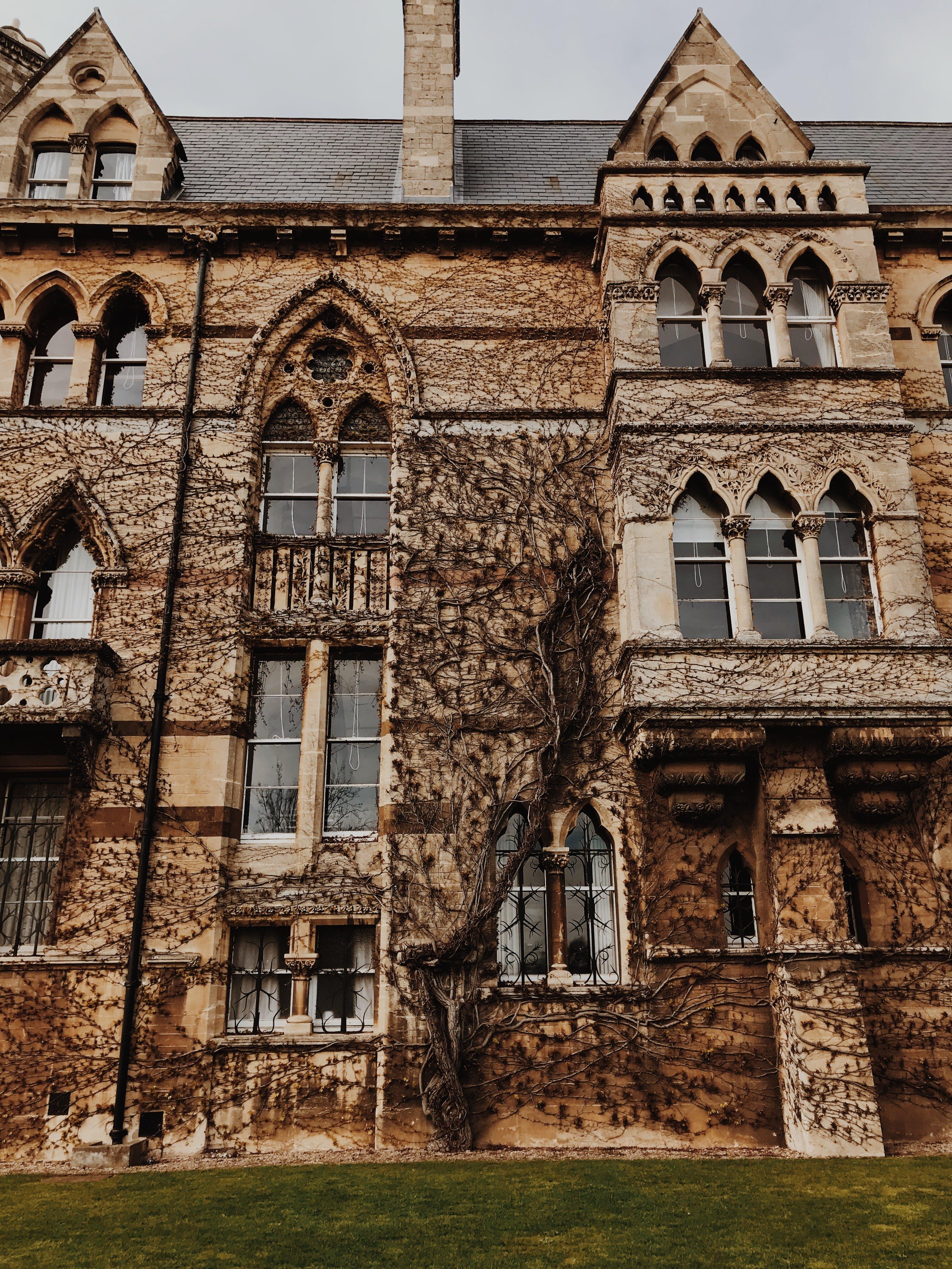 Free stock photo of castle, vines