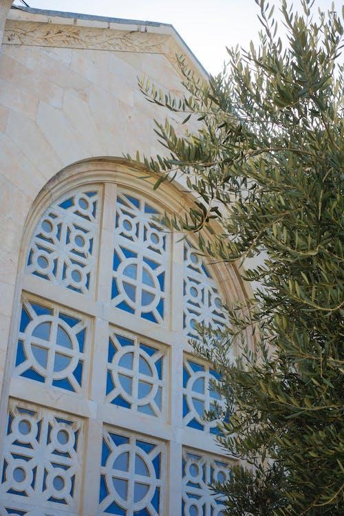 Darmowe zdjęcie z galerii z architektura, drzewo oliwne, gałązka oliwna, getsemani