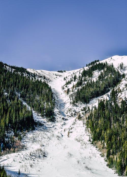 Kostenloses Stock Foto zu bäume, berg, draußen, einfrieren