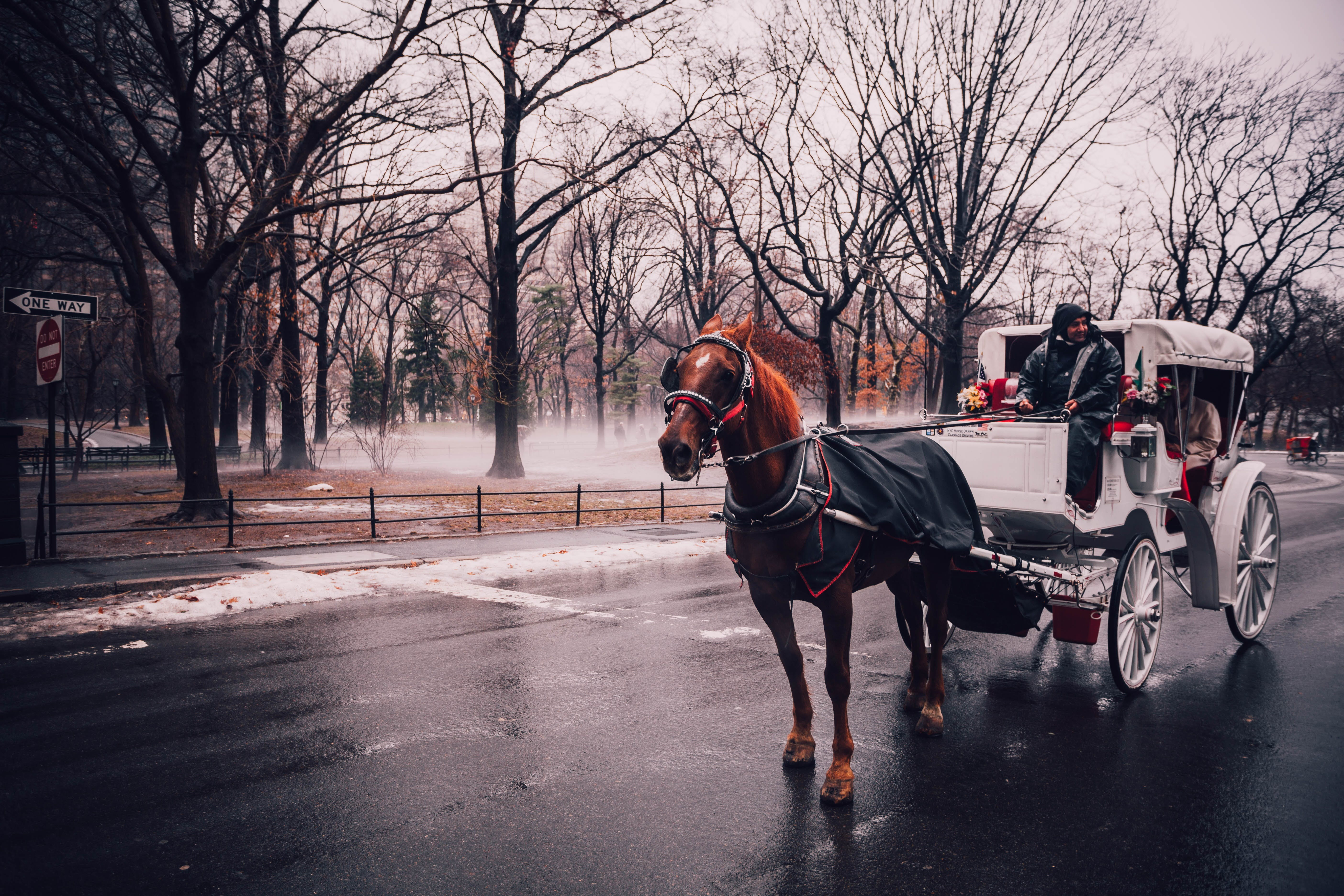 carriage, central park, city