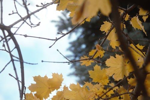 Безкоштовне стокове фото на тему «#nature, #outdoorchallenge, блакитне небо, відділення»