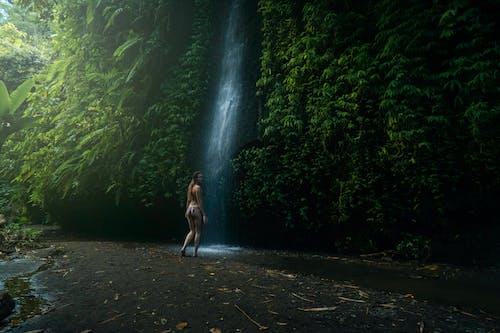 人, 休閒, 原本, 叢林 的 免费素材照片