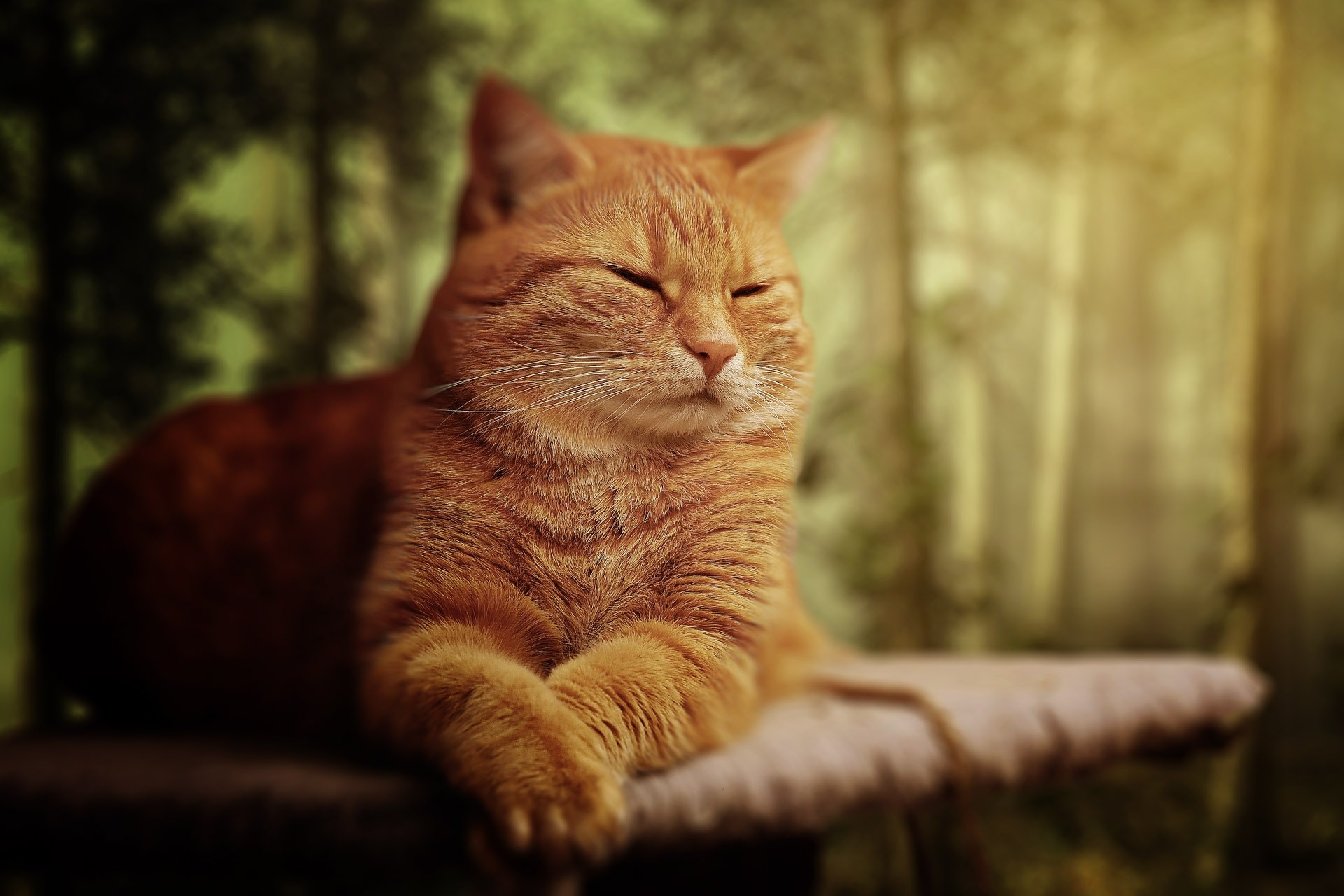 Orange Tabby Cat Laying On Brown Sofa 183 Free Stock Photo