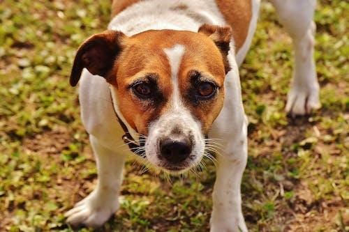 Fotos de stock gratuitas de adorable, animal, canino, césped