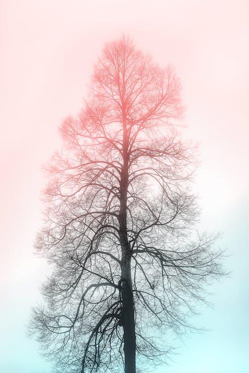 cành cây, cây, khô