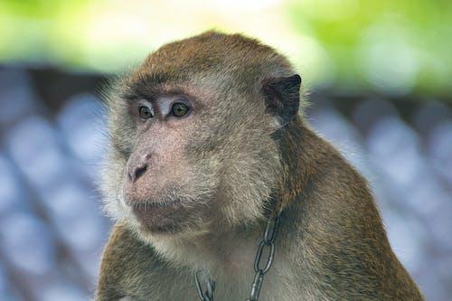 Gratis arkivbilde med ape, dyr, dyrefotografering, dyrehage