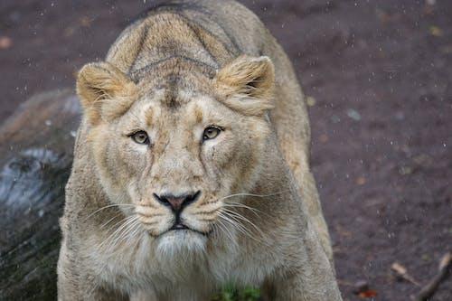 Foto stok gratis bahaya, binatang, binatang buas, binatang liar
