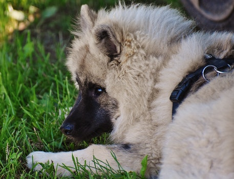 Free stock photo of animal, dog, cute, fur