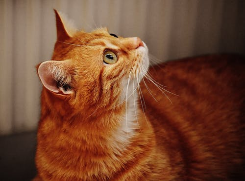 Foto stok gratis anak kucing, berbayang, binatang, bulu