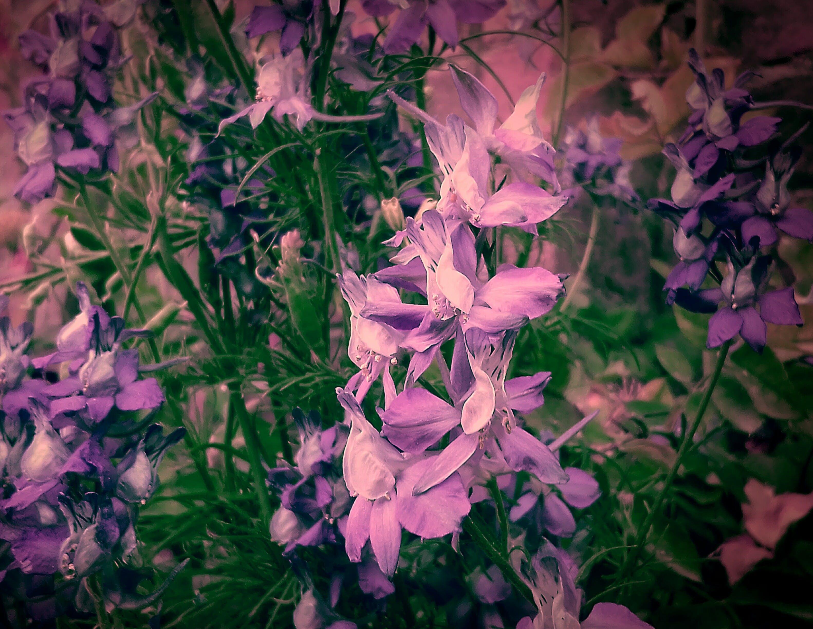 Gratis lagerfoto af 4k-baggrund, android-baggrun, baggrundsbillede, blomst