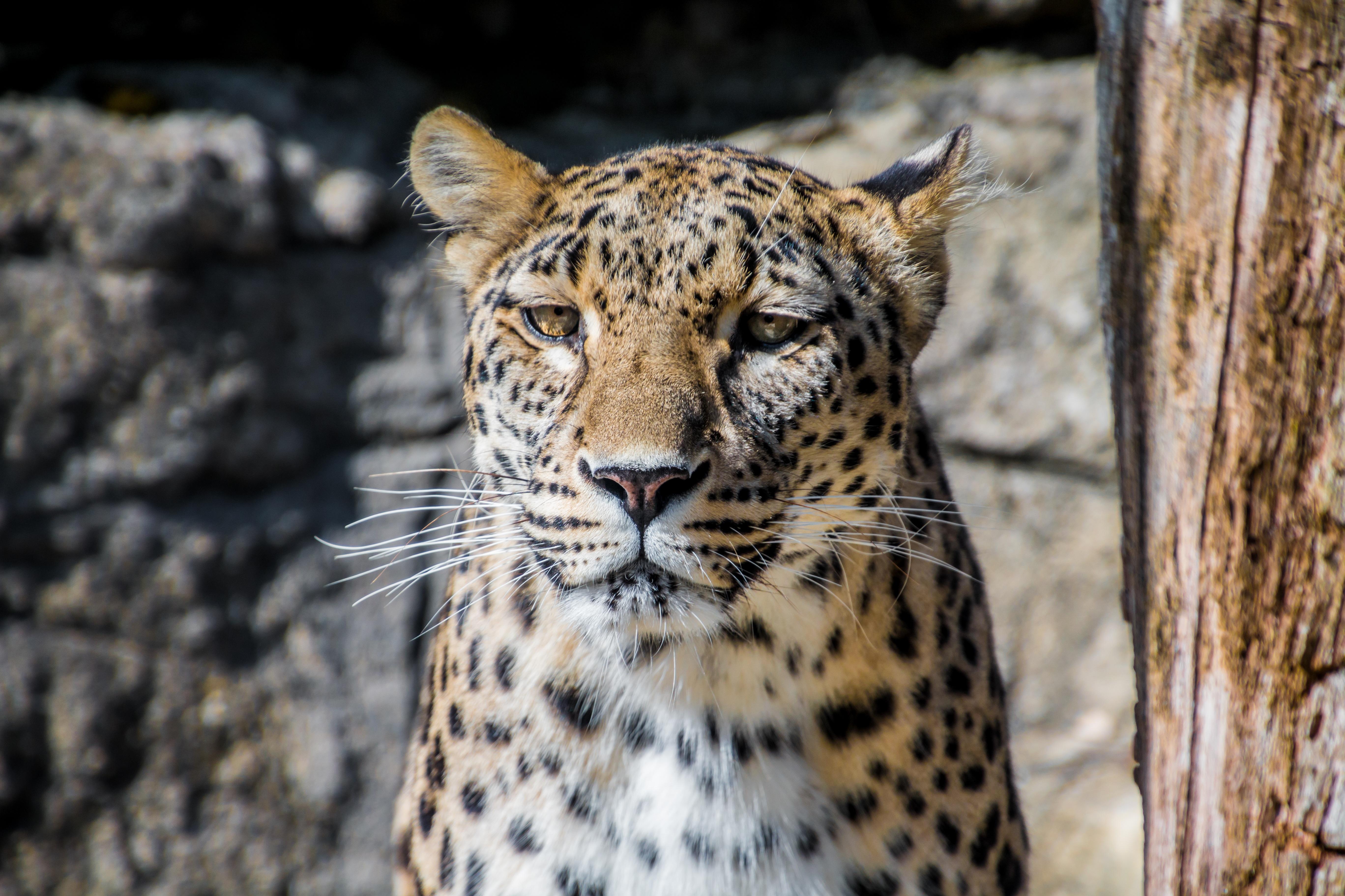 Brown Cheetah Near Brown Frame