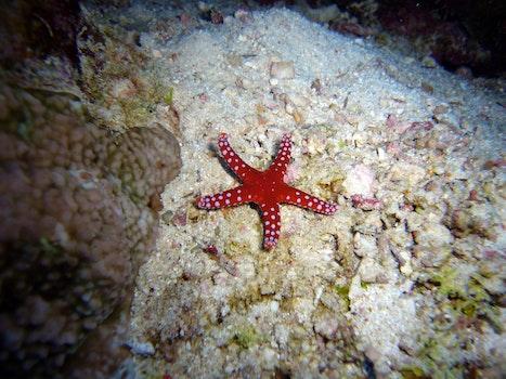 Free stock photo of sea, water, animal, underwater