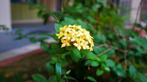 Immagine gratuita di fiore
