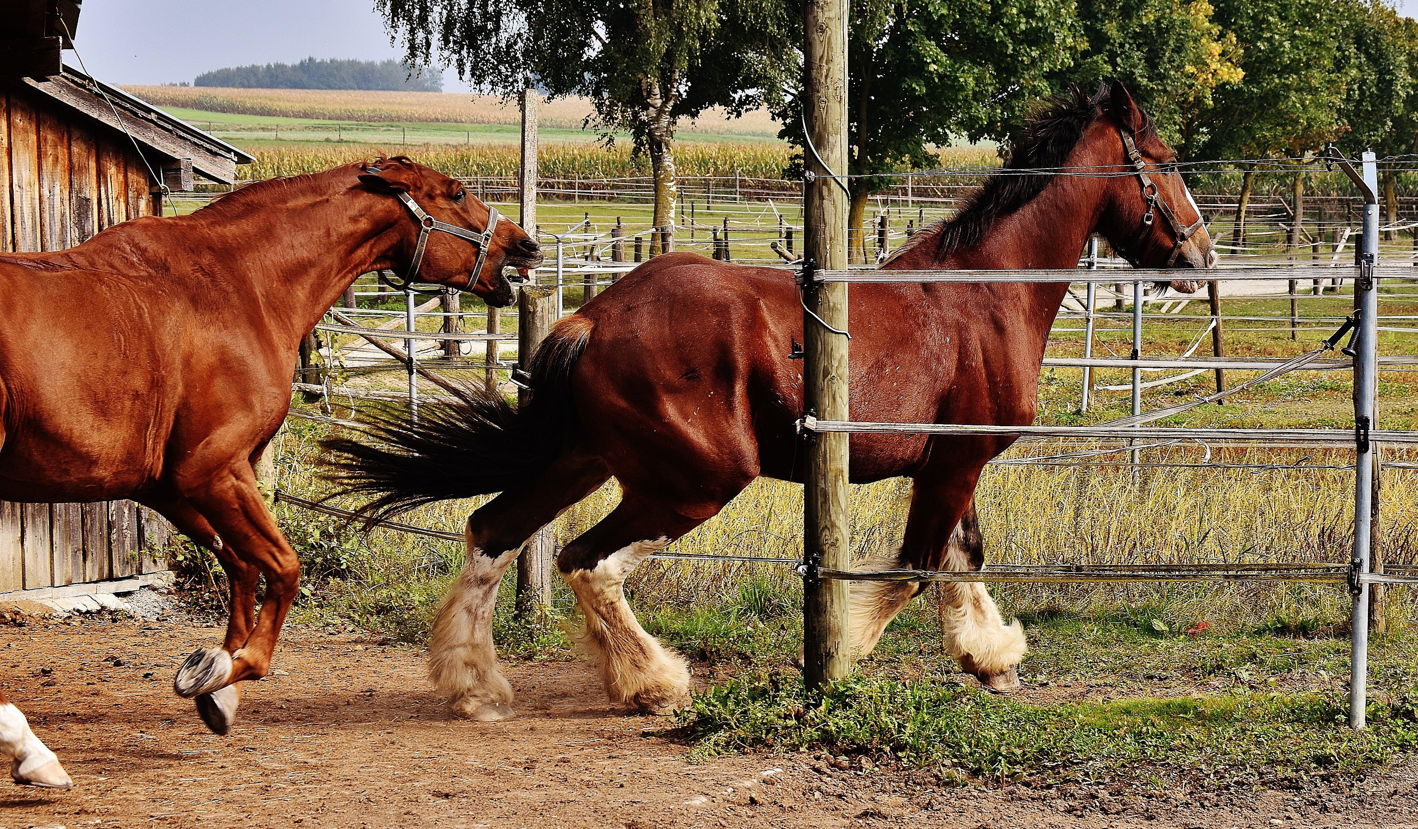 갈기, 경주, 농장, 동물의 무료 스톡 사진
