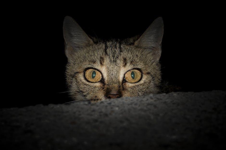 Gato de noche