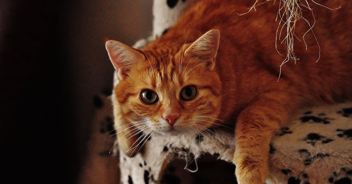 Картинки прикольные рыжих котов, днем
