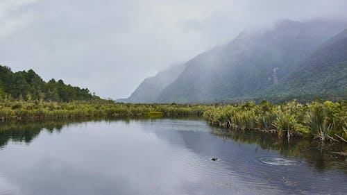 Immagine gratuita di fiume, nebbia, nebbioso