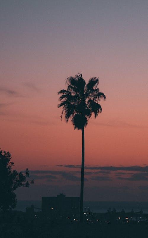 Бесплатное стоковое фото с восход, дерево, закат, кокосовая пальма