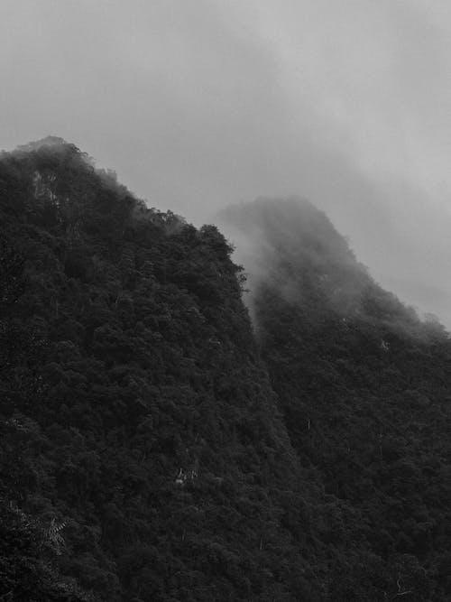 Ingyenes stockfotó domb, ég, fák, fekete-fehér témában